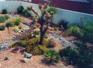 Las Vegas Desert Landscapers
