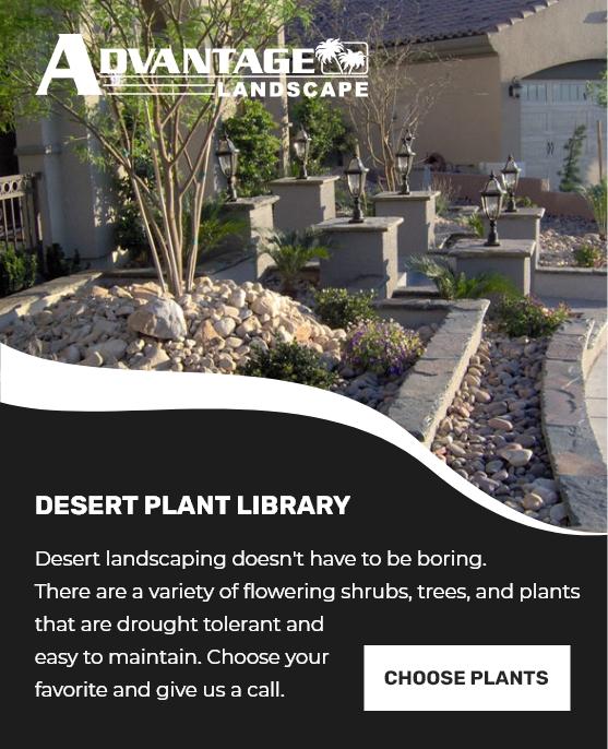 Las Vegas Desert Plant Library